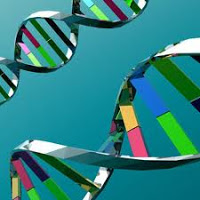 Are Genetics Important in Obesity?