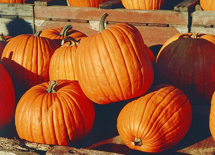 Deliciously Healthy Fall Pumpkin Recipes!