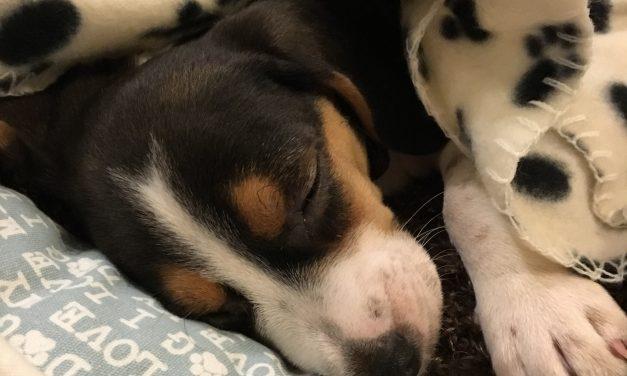 Good Sleep Hygiene Tips!
