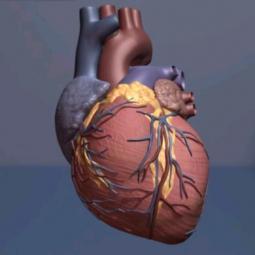 Diabetes Medication Canagliflozin Reduces Cardiovascular Events
