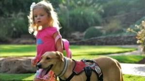 Diabetic Alert Dogs – Fact or Fiction?