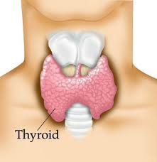 What Do My Thyroid Blood Tests Mean?