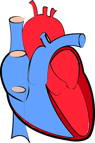 Heart Failure in Diabetes: Frequent, Forgotten, and (Can Be) Fatal
