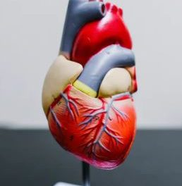 2021 Canadian Lipid (Cholesterol) Guidelines Part 3: People with established cardiovascular disease